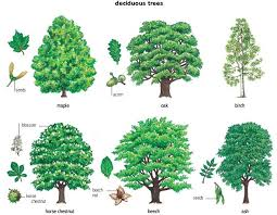 gallery tree names with pictures drawing gallery