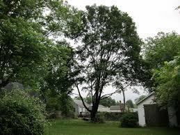 backyard trees home deco plans
