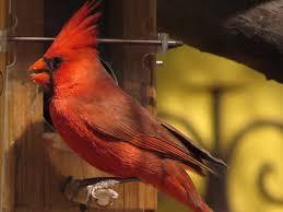 the wild bird store tucson az bird feeders and bird food