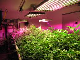 growing plants indoors with artificial light ponds plus grow lights using plant lights and planting ponds