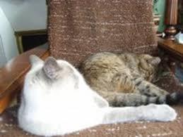 qui pisse sur le canapé mon fait pipi sur le canapé antique canapé design