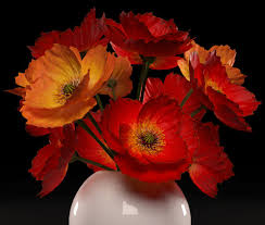 poppies flowers poppies flowers 3d model cgtrader