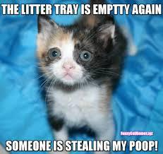 Funny Poop Memes - the litter tray is empty again funny kitten meme