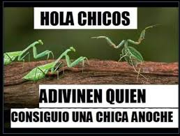 Mantis Meme - mantis v meme subido por illuminati boy memedroid