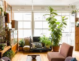 the planthunter u2013 gaylene u0027s maximalist indoor garden