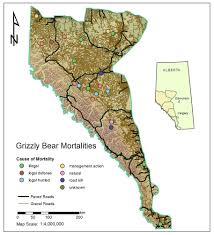Map Of Canada Showing Calgary by The Impact Of Roads On The Demography Of Grizzly Bears In Alberta