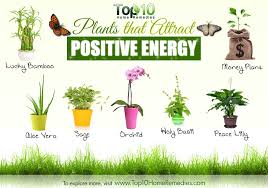 Negative Energy In House 10 Plants That Attract Positive Energy Top 10 Home Remedies
