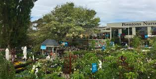 native plants nursery melbourne garden plants and nursery melbourne essendon plants trees