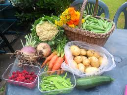 what to do in the kitchen garden in august not just greenfingers