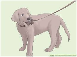 Take Home Lessons Free Dog Training