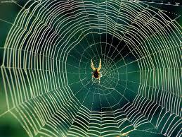 weekend diversion spider webs u2026 on drugs u2013 starts with a bang