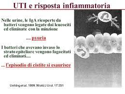 leucociti a tappeto rari eritrociti e leucociti nelle urine overnight shipping