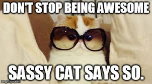 Sassy Cat Meme - image tagged in awesome cat imgflip