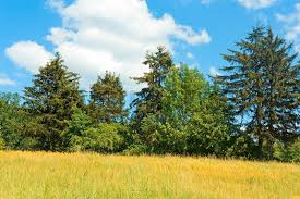 country landscape with meadow and trees stock photo colourbox