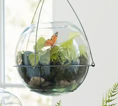 recycled glass terrarium pottery barn