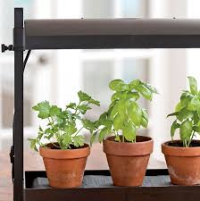 grow lights for indoor herb garden best herbs for growing indoors gardener s supply