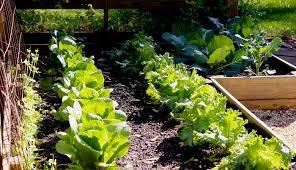 Fall Vegetable Garden Plants by Fall Vegetable Garden Gardening Ideas