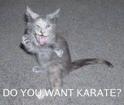Karate Meme - do you want karate cat meme cat planet cat planet