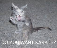 Meme Karate - do you want karate cat meme cat planet cat planet