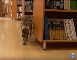 Cats In Small Spaces Video - these cat librarians will inspire you to read more iheartcats com