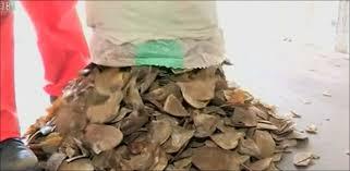 K Hen Schweiz 20 Minuten 3 Tonnen Pangolin Schuppen Beschlagnahmt News