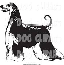 afghan hound attack royalty free stock dog designs of animals page 9