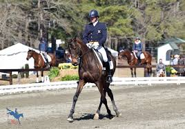 Usea Young Horse Training The Importance Of Inside Leg To