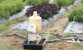 Insecticide For Vegetable Garden by Drip Chemigation With Insecticides In Vegetables Growing