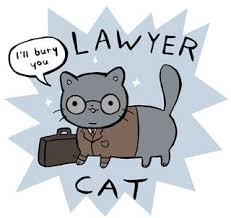 Lawyer Cat Meme - hilarious lawyer dog memes you need to see lawyer cat laying down