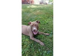 Seeking Dumpster Puppy Found Abandoned In Hamden Dumpster Hamden Ct Patch