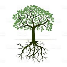 green tree and roots vector illustration stock vector