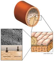 materials free full text biophysical cueing and vascular