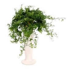 decorative trees for home 10 best houseplants to de stress your home and purify the air