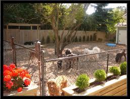 dog friendly backyard landscaping ideas garden ideas for dogs