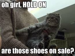 are those shoes on sale cat memes and comics