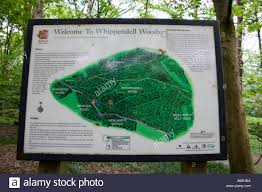 Hertfordshire England Map by Map Of Whippendell Woods Hertfordshire Uk Stock Photo Royalty