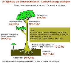 tropical trees solution for climate change matter of trust