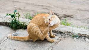 Bed Bugs On Cats What Are The Best Flea Collars For Cats 2017 Edition Pest