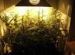 chambre culture indoor chambre de culture cannabis interieur