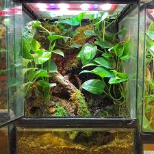 Zoo Med Lighting by Red Eyed Tree Frog Terrarium Diy This Terrarium With A 18x18x24
