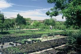 Landscape Nurseries Near Me by Random Harvest Nursery Announced As Supplier Of The Year By Sali