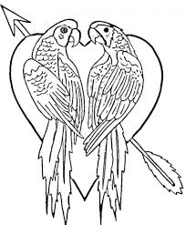 elegant parrot coloring page 11 for your download coloring pages