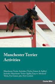 manchester terrier activities manchester terrier activities