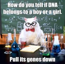 Dna Meme - science cat and dna meme by megustamadi memedroid