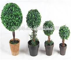 bonsai tree bonsai tree suppliers and