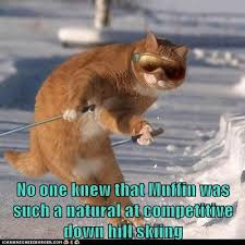 Skiing Meme - no one knew that muffin was such a natural at competitive down