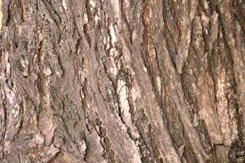 tree bark texture free stock photo domain pictures