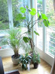 plants at home buy indoor plants for a healthy body and clear mind