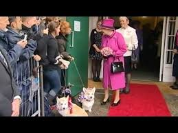 Queen Corgis All The Queen U0027s Corgis Youtube