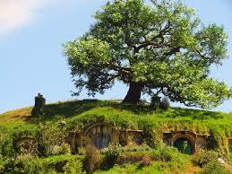 hobbiton set tour thecuriouskiwi nz travel